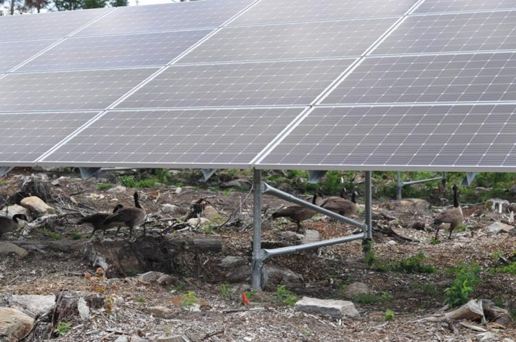 Saranac solar project to be up and running by November